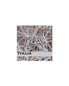 THUJA - Germany - EureZimmer - CDR - Strauch