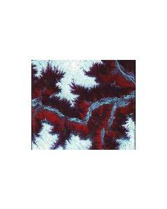 MAEROR TRI - pulse zero: six - Czech Republic - Purple Soil - CD - Multiple Personality Disorder