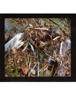 COLUMN ONE - aatp21 - Germany - aufabwegen - CD - Feldaufnahmen I