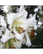 SEHNSUCHT - CSR124CD - UK - Cold Spring - CD - Wüste